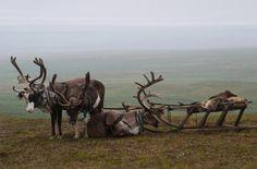 The SUV of a Nenets reindeer herder. Photo by Mik-Mak - Pixdaus