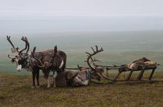 The SUV of a Nenets reindeer herder. Photo by Mik-Mak - Pixdaus