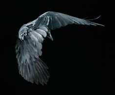 Photo from the 'More than Human' series by Tim Flach Photography.