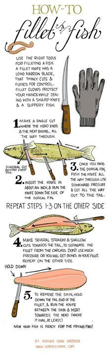 How to fillet a fish ~