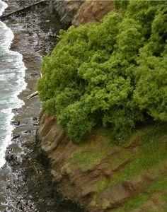 Model railroad shoreline--I like the waves. Cliffhanger