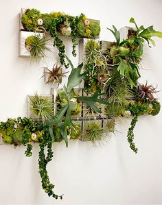 72 Most Amazing Indoor Plants Wall Garden Decoration Ideas - Page 34 of 72 - Diaror Diary Jardin Vertical Diy, Vertical Garden Design, Vertical Gardens, Vertical Plant Wall, Air Plants, Indoor Plants, Indoor Herbs, Wall Garden Indoor, Indoor Plant Wall