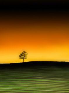 ♂ silence nature solitude tree