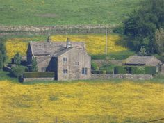 Buttercups in the hay meadows around century Akroyd Farm in Pecket Well near Elmet Farmhouse holiday cottage above Hebden Bridge Hebden Bridge, Yorkshire Dales, 17th Century, Walks, Countryside, Farmhouse, Cottage, House Styles, Spring