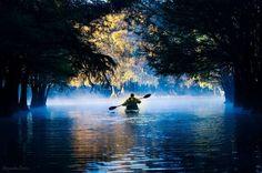UN LAGO PARA RECORDAR… Es tan sorprendente la inmovilidad de las aguas del Lago Camécuaro, el silencio de sus aguas tan profundas y las sombras que crean las enormes ramas, al entrar en este lago es como si te desconectaras de todo ruido, de toda precupación, y dejaras que tu alma se conecte con el lago que te invita a descansar.