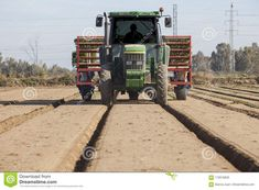 Tractor with tomato transplanter machine inserting seedlings on