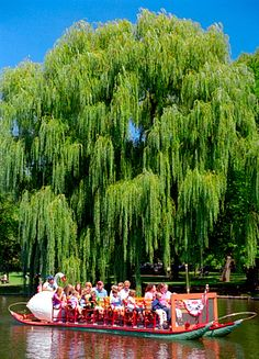 Boston's famous Swan Boat & Weeping Willow Tree at Boston Public Gardens