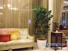 feng shui interior design - 1000+ images about Using plants in interior design on Pinterest ...