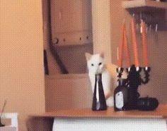 Eine typische Katze aus einem Haushalt.. | Lustige Bilder, Sprüche, Witze, echt lustig