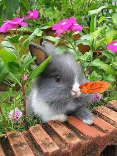 บอกรักด้วยดอกไม้