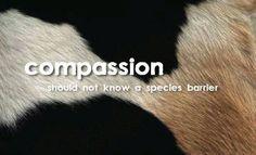 #EndSpeciesism. Choose compassion, choose #vegan EM-C
