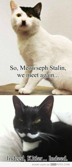 Meowseph Stalin and Kitler - Funny cats that are Stalin and Hitler look-alikes ... I am both shamed and proud of my low brow humour.