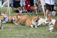 Corgis throw the BEST parties, | 108 Reasons Why Corgis Really Are That Great