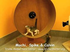 homemade DIY cat wheel (and also designlight) - YouTube