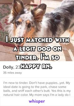 I just matched with a legit dog on tinder. I'm so happy rn.