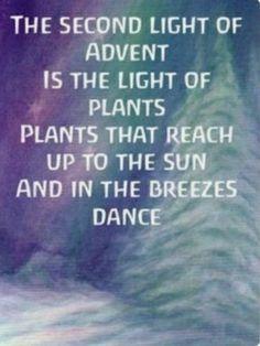 Het tweede licht van Advent is het licht van de planten. The second light of Advent is the light of the plants.