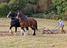 Heavy Horse Show at Chiltern Open Air Museum