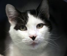 Sadie has a new picture! Adopt this sweet 5 year old today!