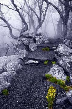 Into the mystic Appalachian Trail, Virginia
