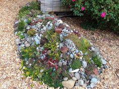 Sukkulenten Arten Perfekt Für Einen Sonnigen Steingarten