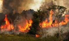 fire in amazon forest