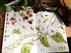 Sketchbook Botanical Art Online with Dianne Sutherland, botanical art courses Watercolor Journal, Watercolor Flowers, Watercolor Art, Watercolor Portraits, Nature Sketch, Nature Drawing, Botanical Drawings, Botanical Prints, Illustration Courses
