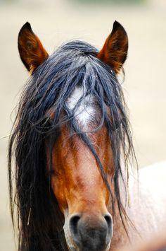 Stallion Freedom in Return to Freedom American Wild Horse Sanctuary. Photo by Roy Bozarth.