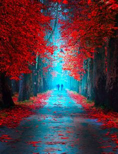Fairytale Pathway Photography by Mevludin Sejmenovic is part of Beautiful photography nature - Zebra Art provides the information about the art world News about painting, photography, illustration, exhibition, sculpture and installation art Vintage Nature Photography, Beautiful Landscape Photography, Autumn Photography, Beautiful Landscapes, Travel Photography, Nature Pictures, Beautiful Pictures, Beautiful Nature Wallpaper, Fantasy Landscape