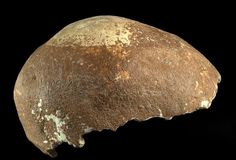 Un antiguo cráneo humano encontrado en Israel podría ser uno de los descubrimientos más importantes `para la comprensión de la historia de la evolución humana. El cráneo de 55 mil años se encon