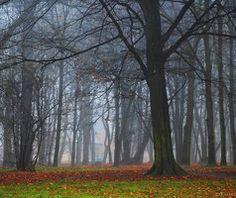 Trees by Syrjusz