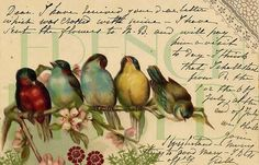 Birds and flowers digital vintage antique postcard scan script Vintage Ephemera, Vintage Cards, Vintage Paper, Vintage Postcards, Vintage Stationary, Images Vintage, Vintage Pictures, Images Victoriennes, Free Images