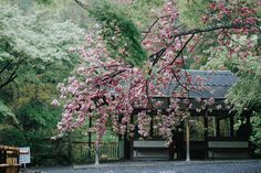 A Japan itinerary packed with travel tips for Japan, recommendations, and pictures of beautiful places in Japan!