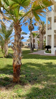 Summer in Crete , Maleme , Chania ....@mikehotelapartments Hotel Apartment, Apartments, Crete Island Greece, Holiday, Plants, Summer, Vacations, Summer Time, Holidays