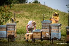 """Vista ad una delle arnie Top Bar del progetto """"potere allo sciame"""" nell'apiario di Renzo Erini"""