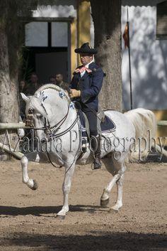 Azahara Photography: Jornada de Puertas Abiertas - Yeguada Militar de Jerez