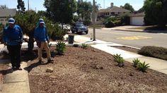 Residential Santa Barbara Front Yard and Back Yard Cleanup Fall Clean Up, Santa Barbara, Gardens By The Bay, Pebble Beach, Spring And Fall, Building Design, Sidewalk, Design Inspiration, Backyard