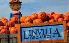 Linvilla Orchards - The Family Farm for Family Fun!!