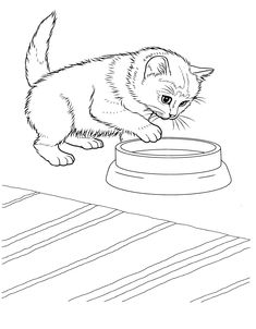 Cat Coloring Pages For Teens And Adults