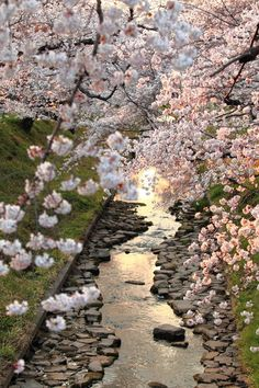 My favorite spring flowering trees are the Japanese Cherry trees......    sakura kawa paths by ~jyoujo on deviantART