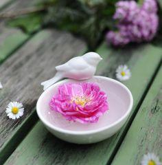 Porzellanschälchen mit Rose. Die Schale gibt es bei www.servusmarktplatz.at Shops, Japanese, Rose, Ethnic Recipes, Home And Garden, Nice Asses, Tents, Pink, Japanese Language