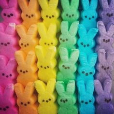 Mignons les petits lapins