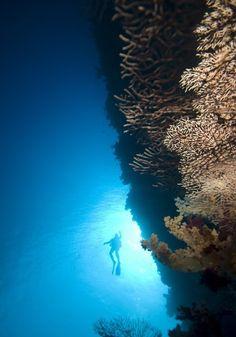 New Wonderful Photos: Amazing Underwater Photography Underwater Photos, Underwater World, Underwater Photography, Amazing Photography, Nature Photography, Cool Pictures, Cool Photos, Beautiful Pictures, Amazing Pics