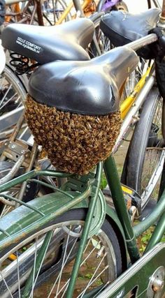 That's gonna bee hard to ged rid of! Bee Swarm, Crazy Bird, Save The Bees, Bees Knees, Cursed Images, Bee Keeping, Scary, Funny Pictures, Random Pictures