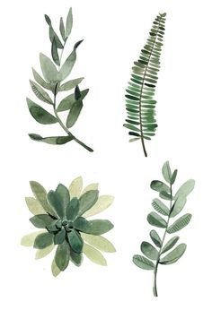 Watercolour leaves