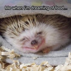 23 Funny Animal Memes And Pictures Of The Day