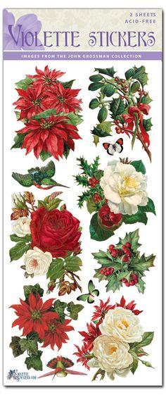 C43-Christmas Roses