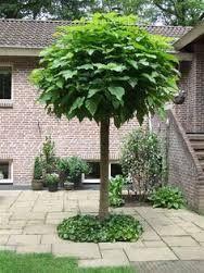 Afbeeldingsresultaat voor kleine bomen voor in de tuin