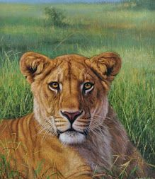 cuadros de leones al oleo