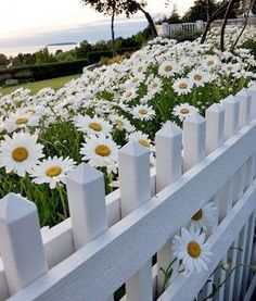 Stepping Stones, Fence, Country, Outdoor Decor, Flowers, Plants, Inspiration, Beautiful, Design