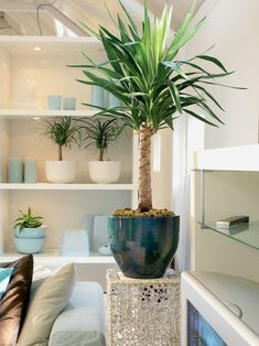 Yucca or Mayatree. Because of its easy character, it is also a good choice for w. Yucca or Mayatre Indoor Tree Plants, Best Indoor Trees, Indoor Plants Low Light, Trees To Plant, Potted Plants, Interior Design Plants, Plant Design, Lowes Plants, Small Gardens
